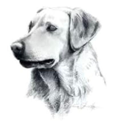 Drawing Of A Dog Biscuit some Bailey S Choice Pet Treats Recalled Due to Salmonella Concerns