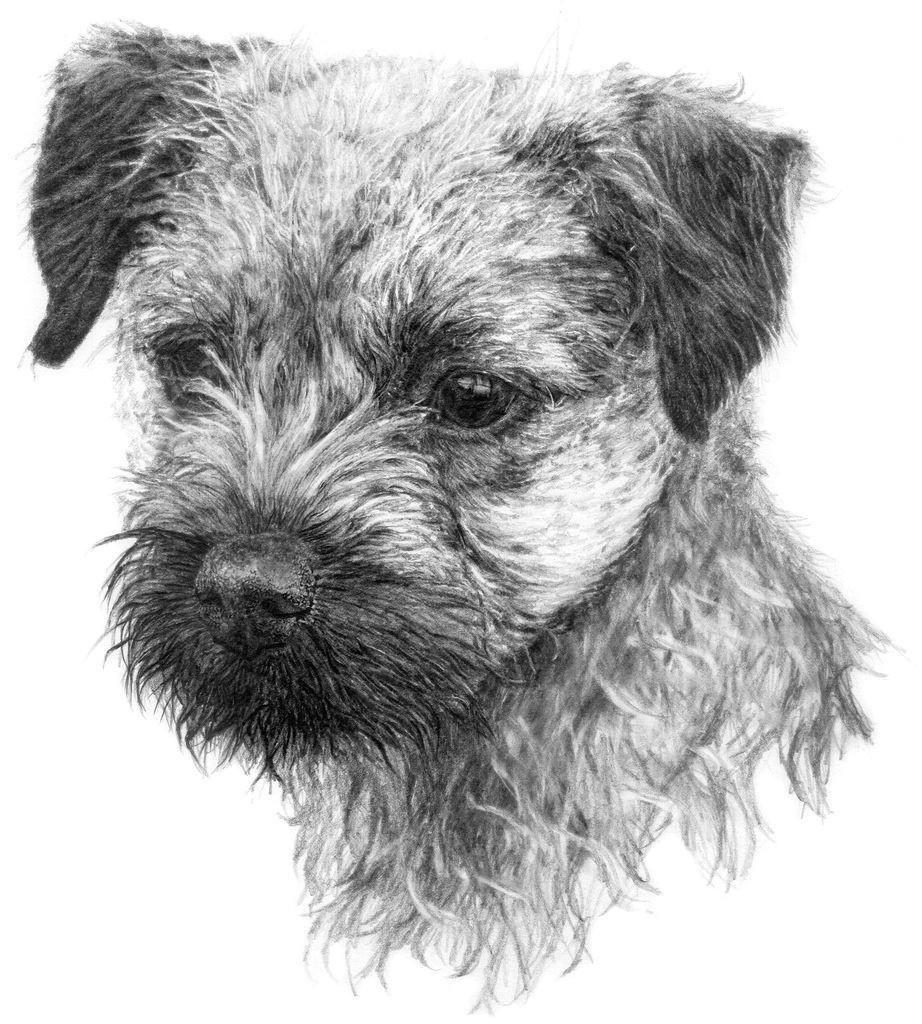 image result for graphite drawing dog border terrier