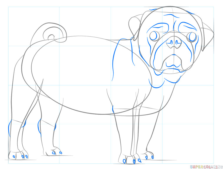 how to draw a pug dog step by step drawing tutorials for kids and beginners