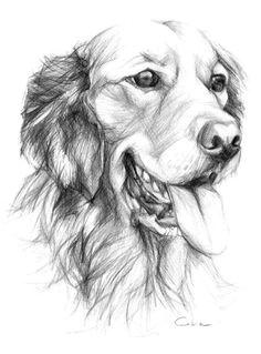 beaux dessins de divers artistes page 2 pencil artpet drawingsanimal