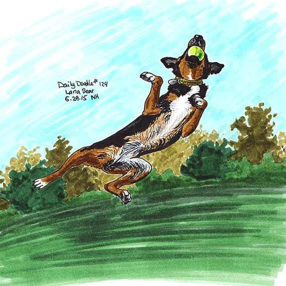 no 124 lana bear illustration daily doodle art print happy birthday to my kelpie lana bear here she is doing her favorite thing needlessly jumping