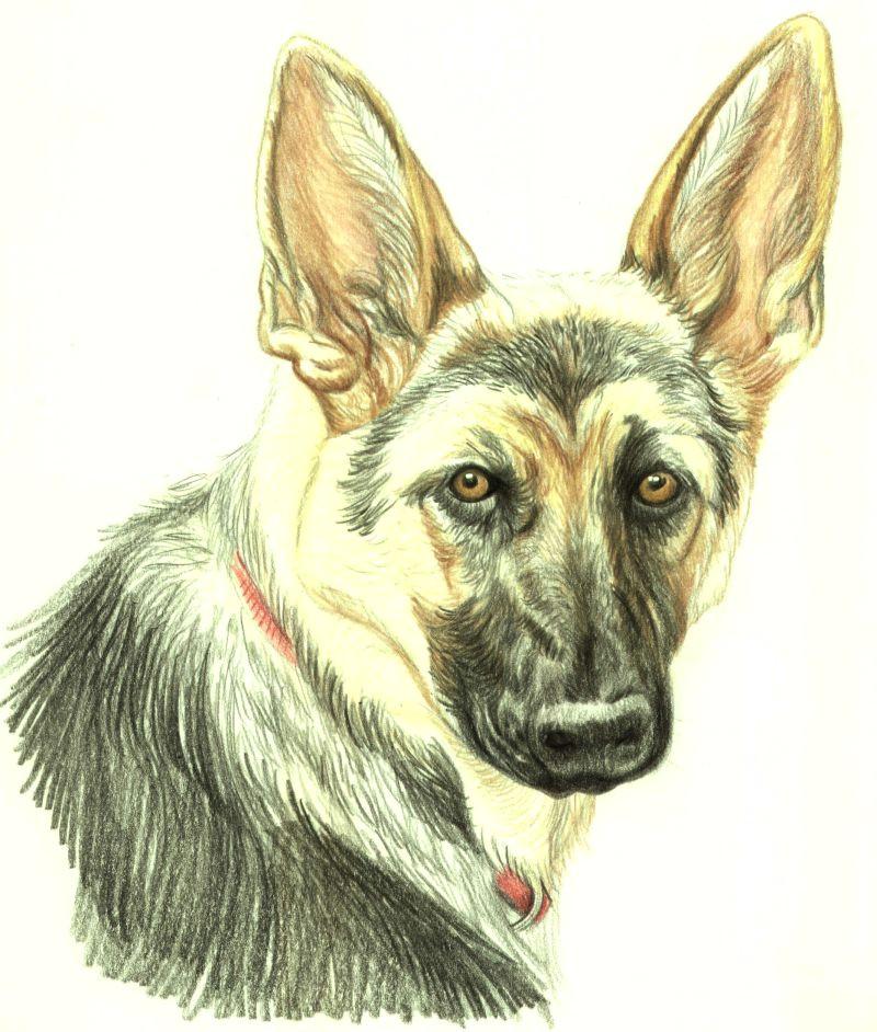 dog portrait 10 56a26d653df78cf77275897e jpg