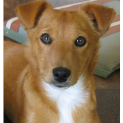 a photo of a cute puppy dog