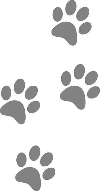 paw print clip art paw patrol cat clipart gata marie bear paws