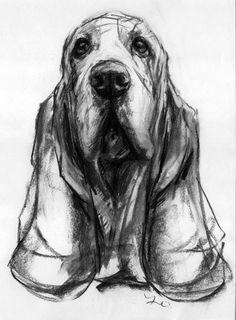 nice study of a basset by justine osborne dogs pets bassethounds