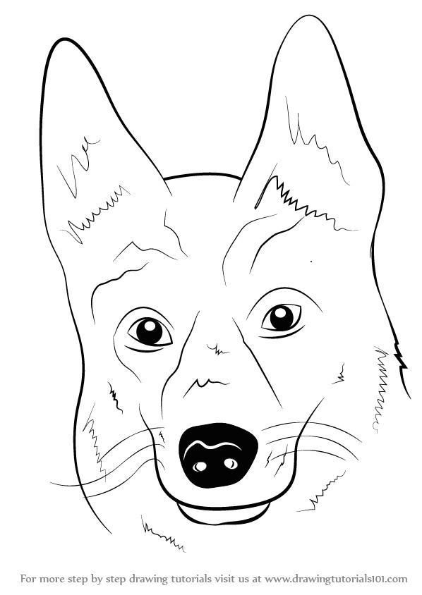 Drawing Of A Dog S Face Learn How to Draw German Shepherd Dog Face Farm Animals Step by