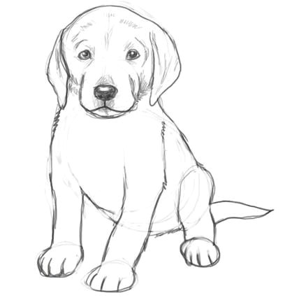 Drawing Of A Dog Sitting Dog Drawings In Pencil Easy for Kids Sketch Coloring Page Drawing