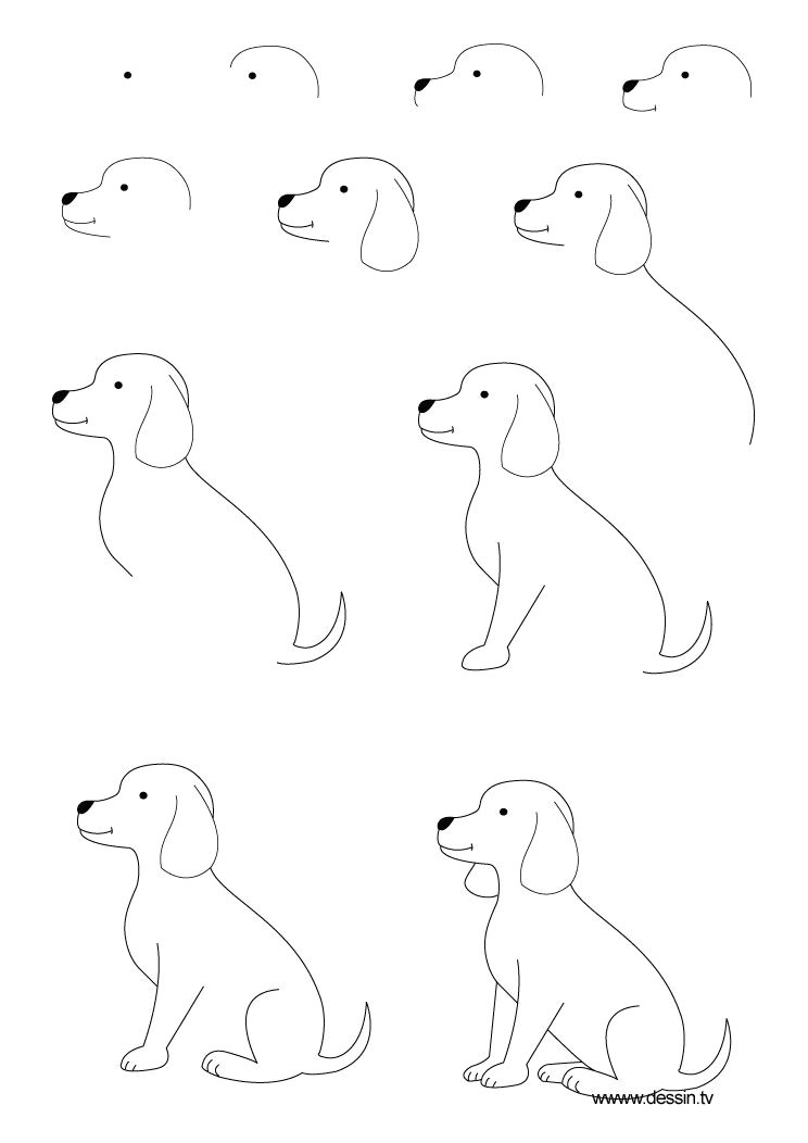 Drawing Of A Dog Step by Step Drawing Animals Step by Step Children Coloring Pages Printable