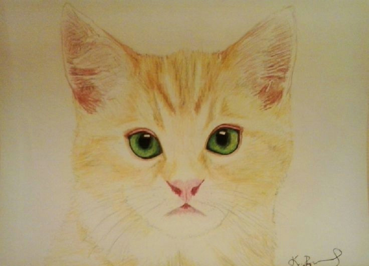 ginger cat with green eyes my passion my drawings draw my drawings ginger cats