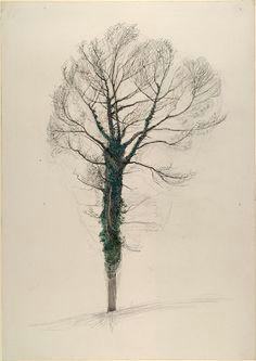 winter ivy john ruskin c winter 1872 1873 botanical art botanical