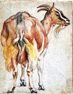 animal range and farm goat pastel sketch by jacob jordaens