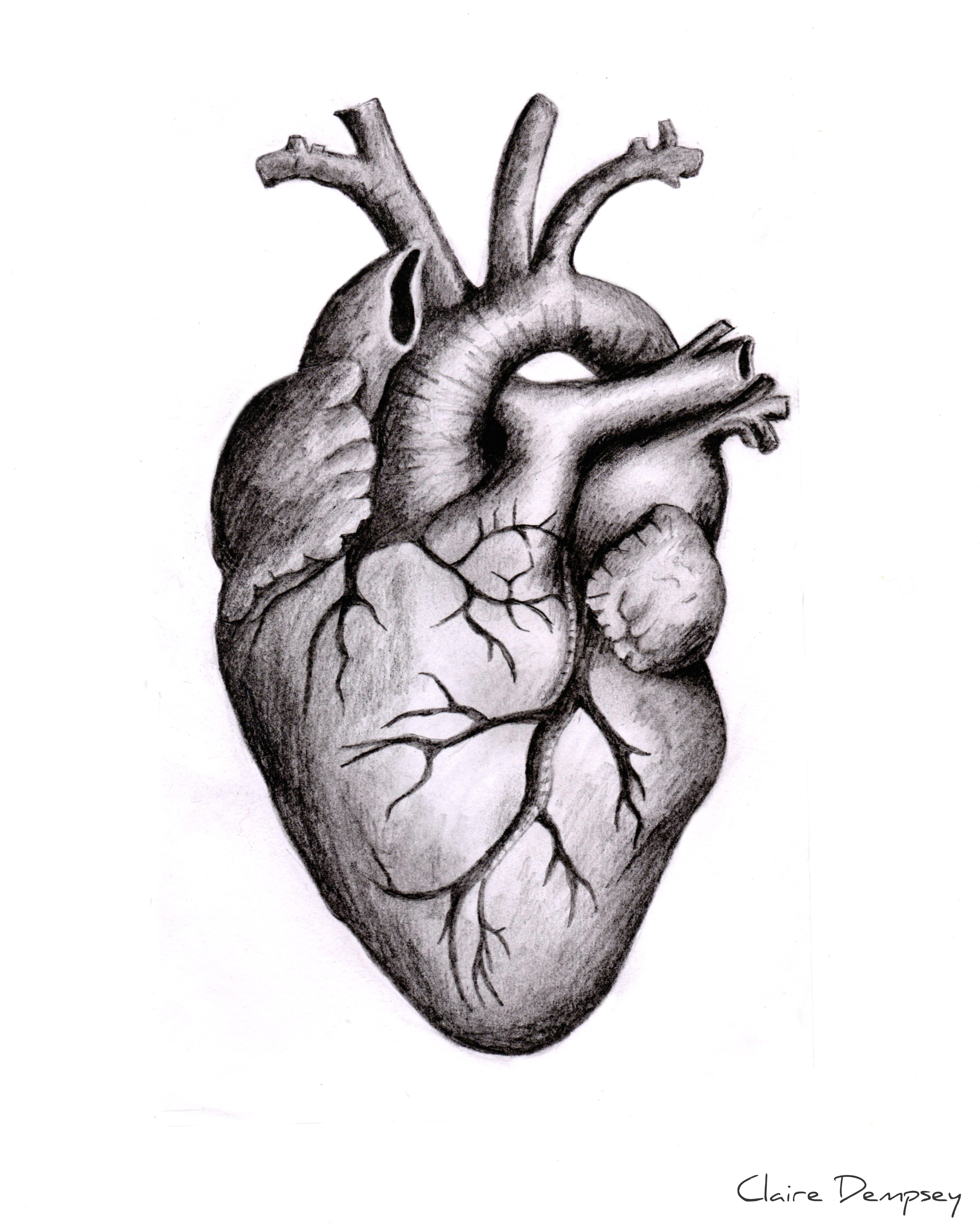 anatomically correct human heart by niku arbabi embroidery