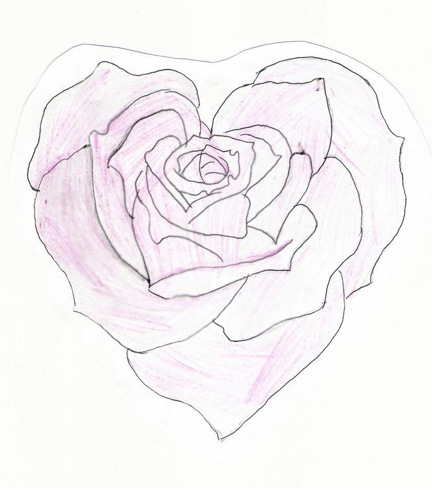 heart shaped rose drawing heart shaped rose by feeohnah