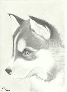 huskies pencil drawings of animals cool pencil drawings animal sketches puppy drawings