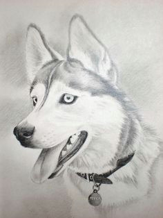 charcoal drawing siberian husky husky drawing a husky named myka