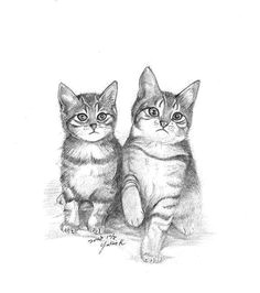 kitten drawings drawing other bw 008