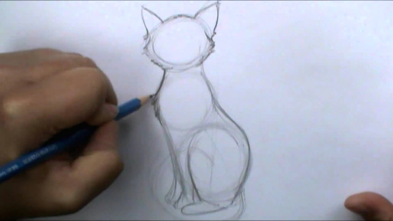 how to draw a basic cat sitting