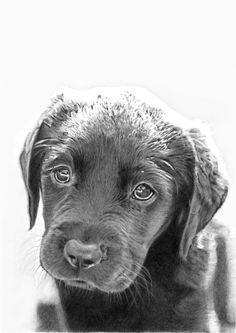 signed limited edition giclee print labrador by gemmahaywardart labrador giclee print labradoodle labradors