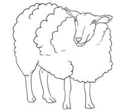how to draw sheep lambs