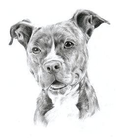 drawing pit bulls pitbull by oocherrytheberryoo