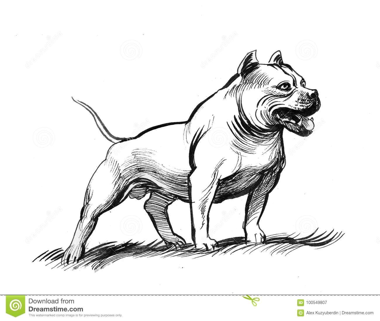Drawing Of A Pitbull Dog Pit Bull Dog Stock Illustration Illustration Of Strong 100549807