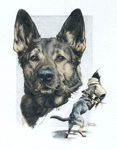 german shepherd police k9 drawing greeting by bewaretreescreations german sheperd dogs shepherd dog german