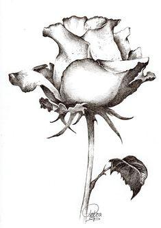 find roses this style beautiful flower drawings watercolor sketchbook cute drawings pencil drawings