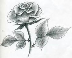 Drawing Of A Rose In Pencil 51 Best Flowers Images Watercolor Painting Flower Designs Pencil