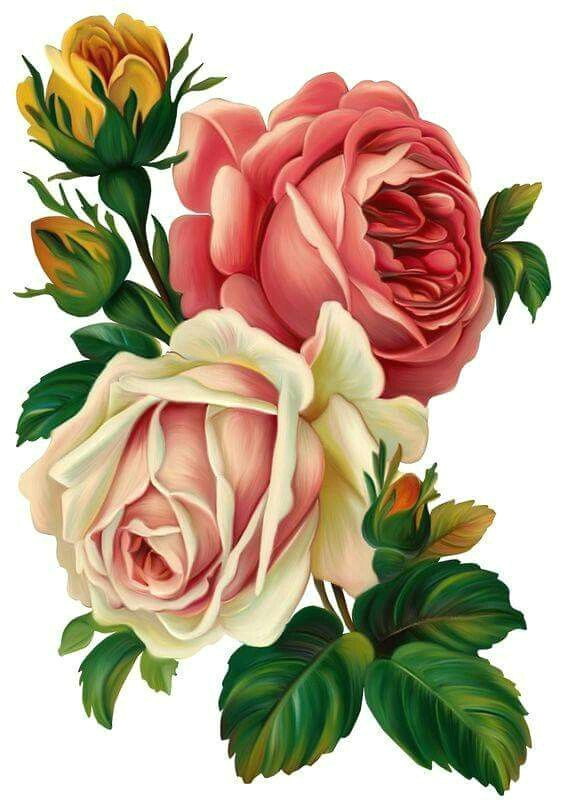 drawing roses s s media cache ak0 pinimg 564x 4d 0d 86