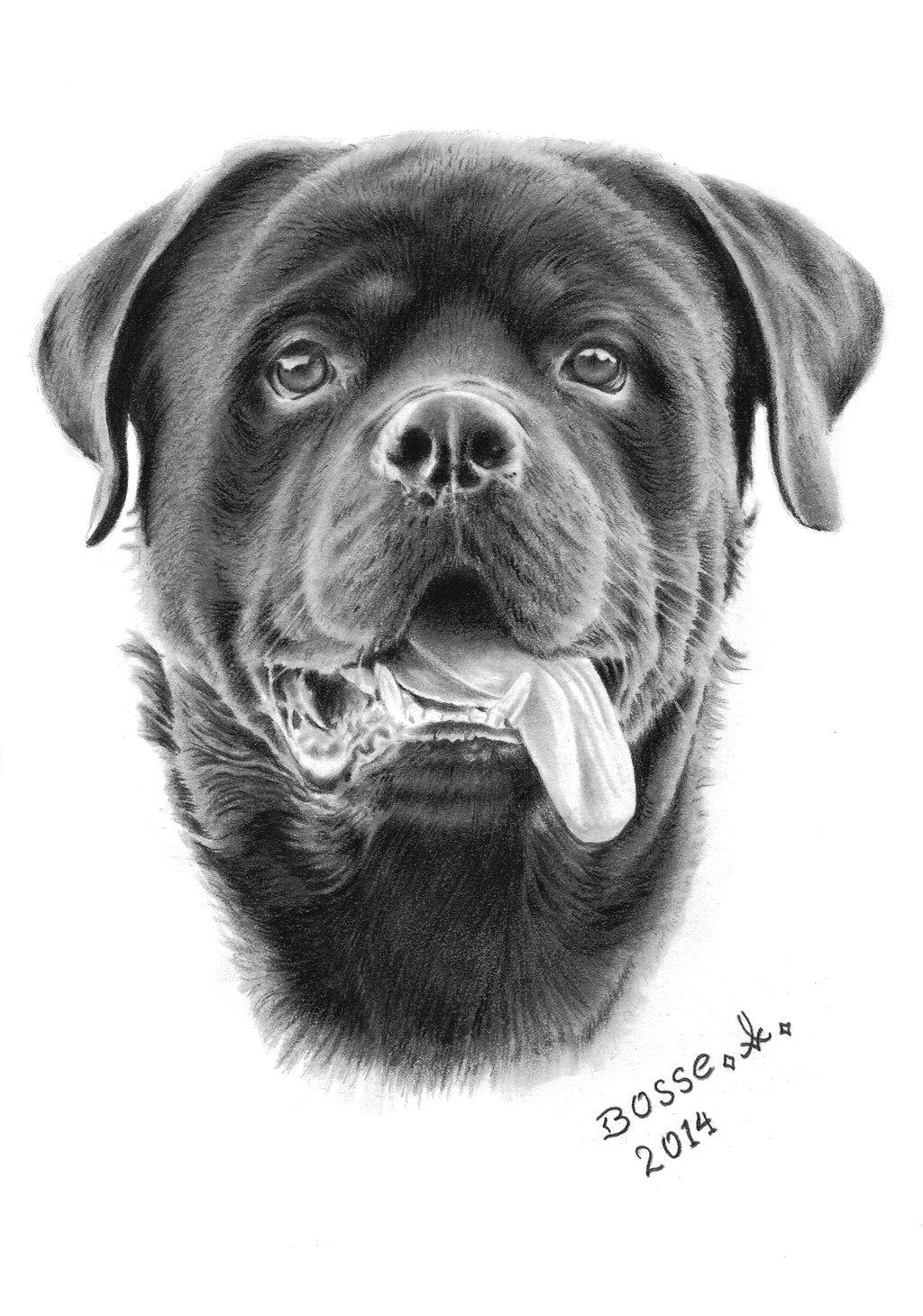 rottweiler 2 by torsk1 on deviantart dog sketches dog artwork rottweiler dog big