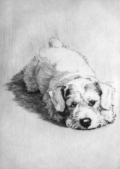 scottie dog cecil aldin etchings oils and watercolours robert perera fine art gallery of
