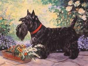 scottie in the garden