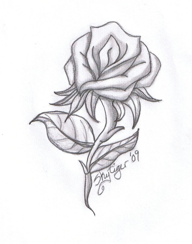 Drawing Of A Single Rose Drawing Beautiful Roses Rose Drawings Rose Symbol Of Love Rose