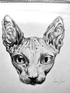 sphynx cat drawing sphynx cat tattoo lykoi cat matou bird drawings cat