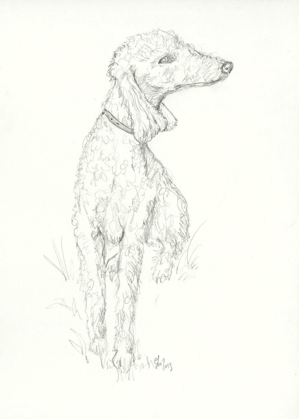 bedlington terrier sketch
