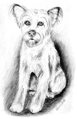 Drawing Of A Terrier Dog Pin by David Little On Terriers Pinterest Zeichnungen Tiere and