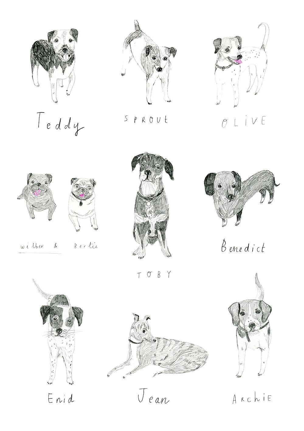 dog illustrations i did for boden http www raisinheart com