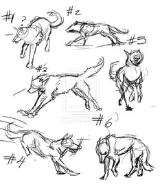 drawing wolf ideas google search wolf sketch love drawings dynamic poses drawing