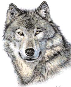 wolf head drawing the wolf by nicole zeug