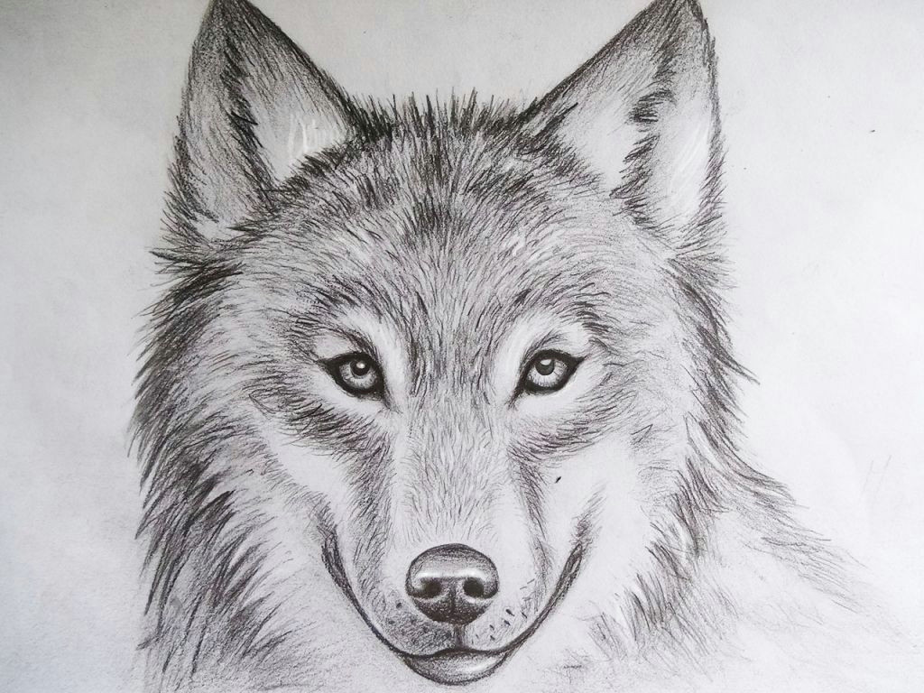 cool drawings of animals pencil art drawing
