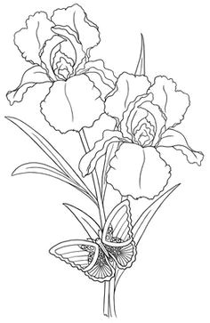 line drawings of irises bing images
