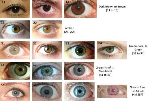 rare eyes eye color chart rare eye colors drawing heads human eye