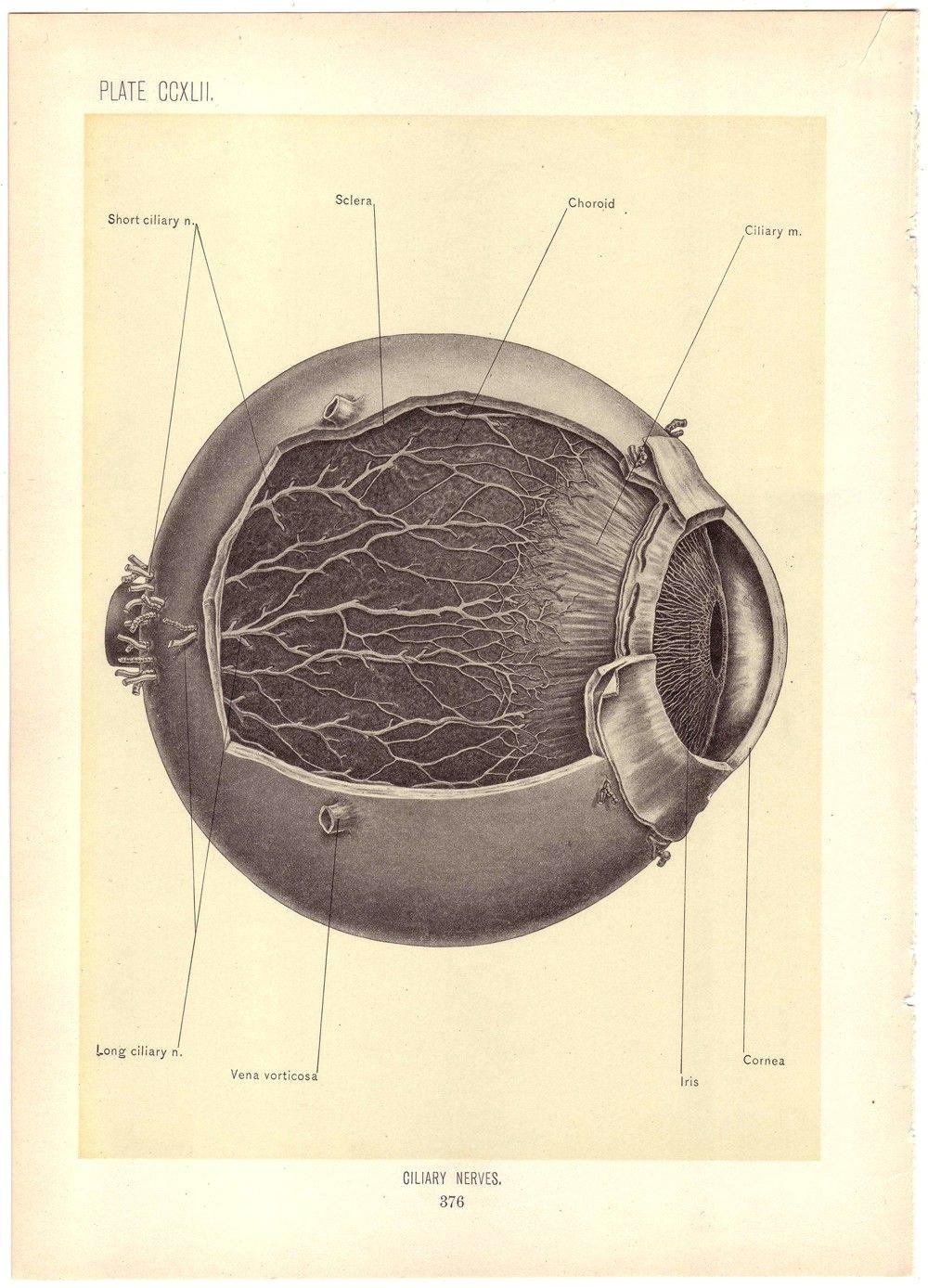 old medical illustration