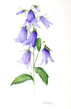 mulligan greta bluebell 2 jpg 600a 926 bluebell tattoo blue