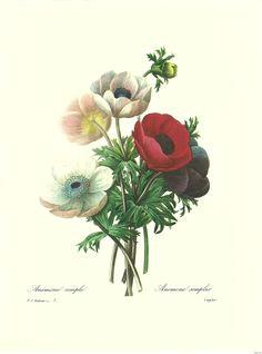 vintage botanical flower prints botanical prints by pierre joseph redoute decoupage vintage botanical prints