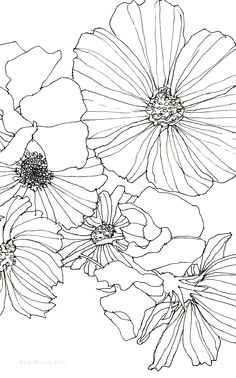 cosmos and sweet pea line drawings of flowerssketches