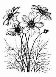 cosmos flower drawing google search zentangle art flowers drawings digital stamps
