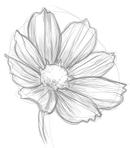 cosmos flower drawingsi e i i e i e i e e