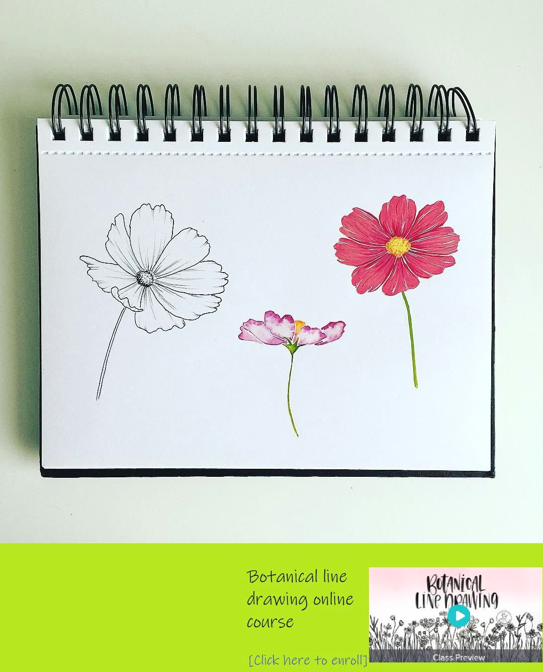here s my cosmos flowers three different ways for inktober with allikdesign i used the