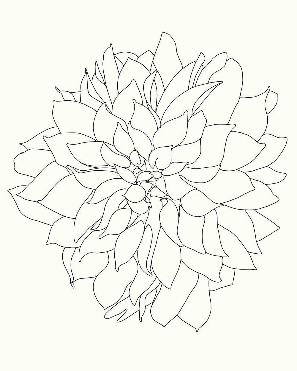 Drawing Of Dahlia Flowers Dahlia Art Pinterest Art Prints Art and Fine Art Prints